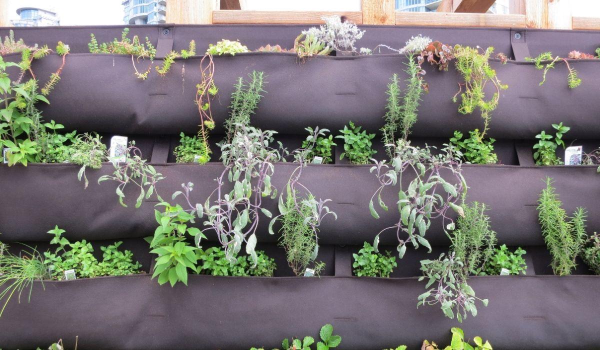 Vertical Gardening  - Gartenkräuter in Blumentöpfen