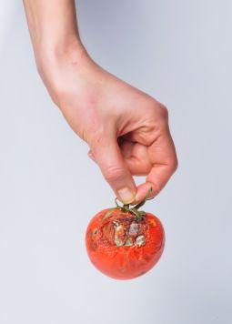 was-das-mindesthaltbarkeitsdatum-bedeutet - Eine Hand hält eine halb verfaulte Tomate - © Shutterstock